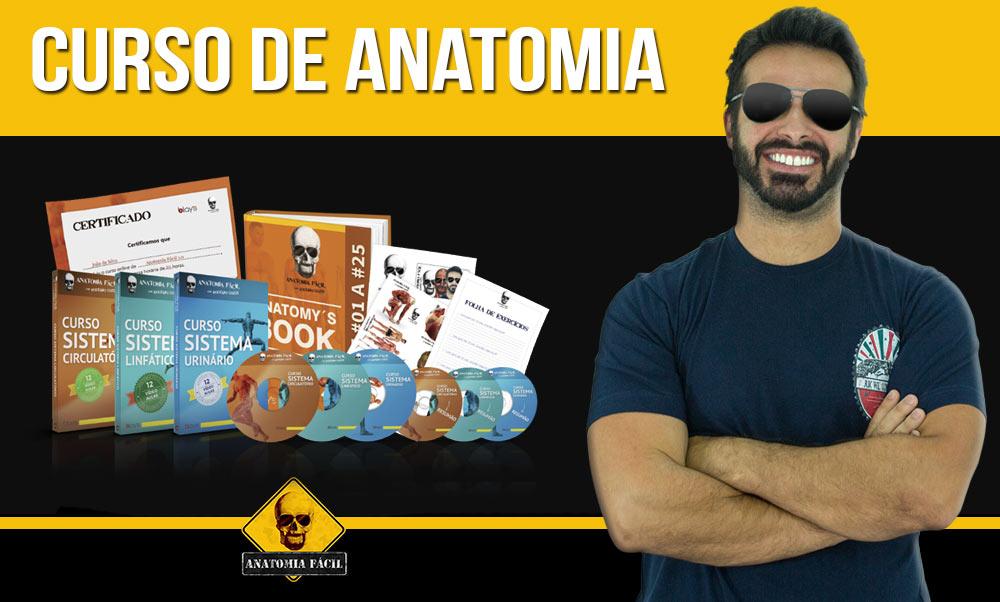 Vistoso Anatomía Como Un Curso Foto - Imágenes de Anatomía Humana ...